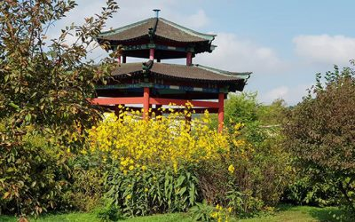 Az őszi Chi Kung tábor margójára: A semmit tevés művészete